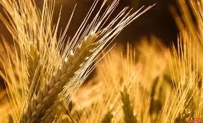 وزير التموين: الاستعانة بالقطاع الخاص في تخزين القمح خلال الموسم المقبل
